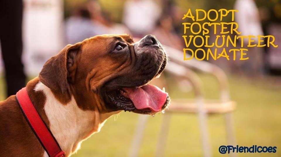 Adoption Center For Dogs In Delhi