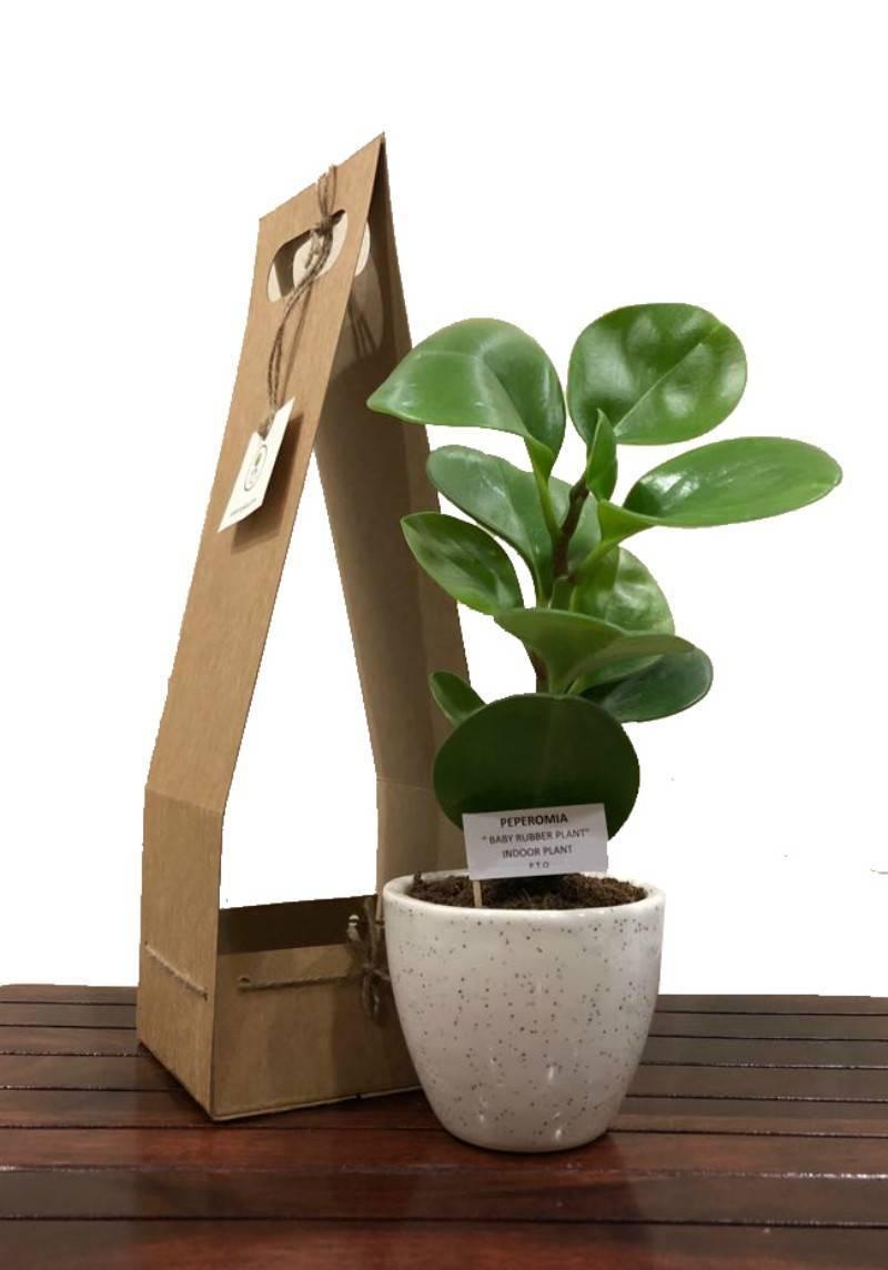 gifting plants for Diwali