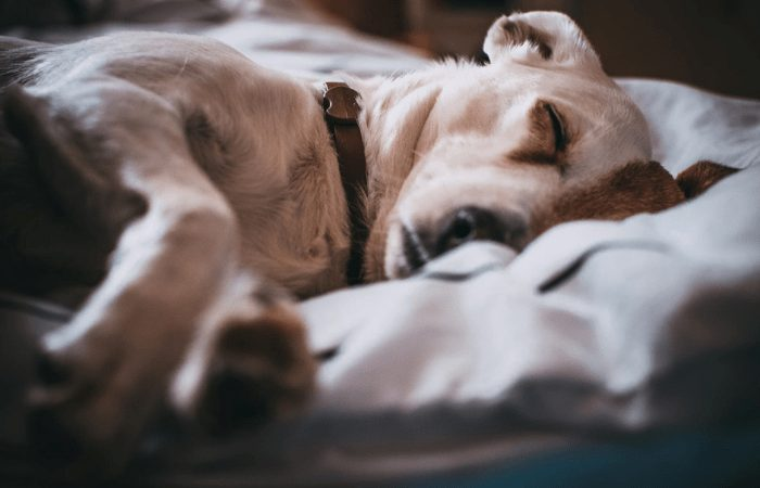 dog sleeping in the bed