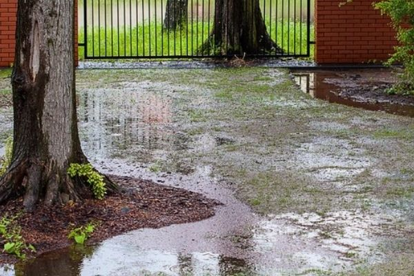 A waterlogged garden area. This is a breeding ground for mosquitoes